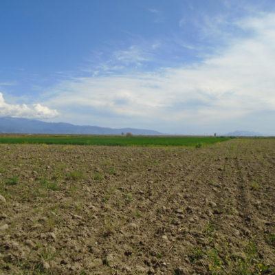 Πωλείται αγροτεμάχιο, στις Θερμοπύλες, κοντά στο Ελαιοτριβείο.